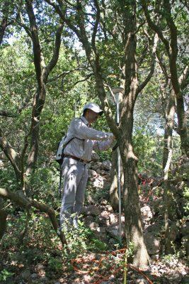 2018- ακριβής θεσιθεσία μέσα στα δέντρα
